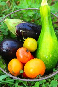 legumes-jardin